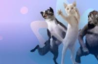 Animales que Bailan